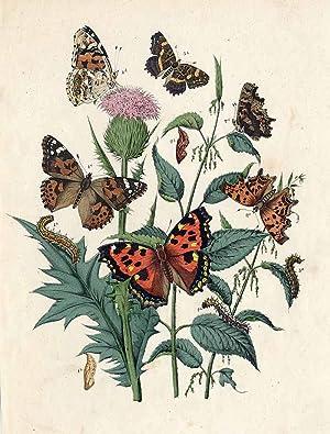 """Motyle.""""]"""
