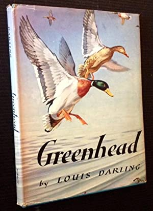 Greenhead: Louis Darling