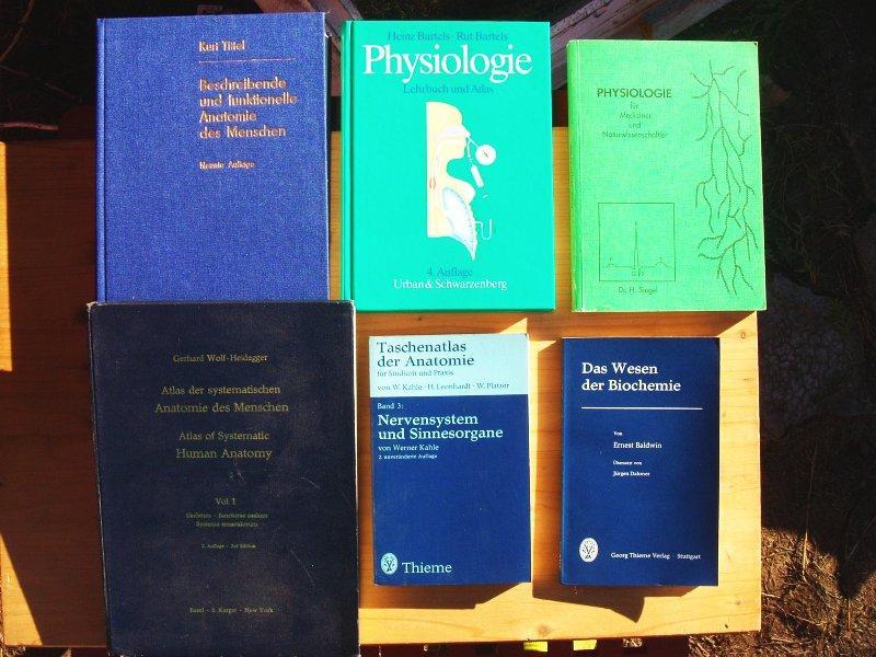 Tolle Anatomie Und Physiologie Lehrbuch Ideen - Menschliche Anatomie ...
