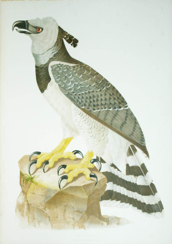 Tab. 2 Harpyia Cristata.: Jean Theodore Descourtilz