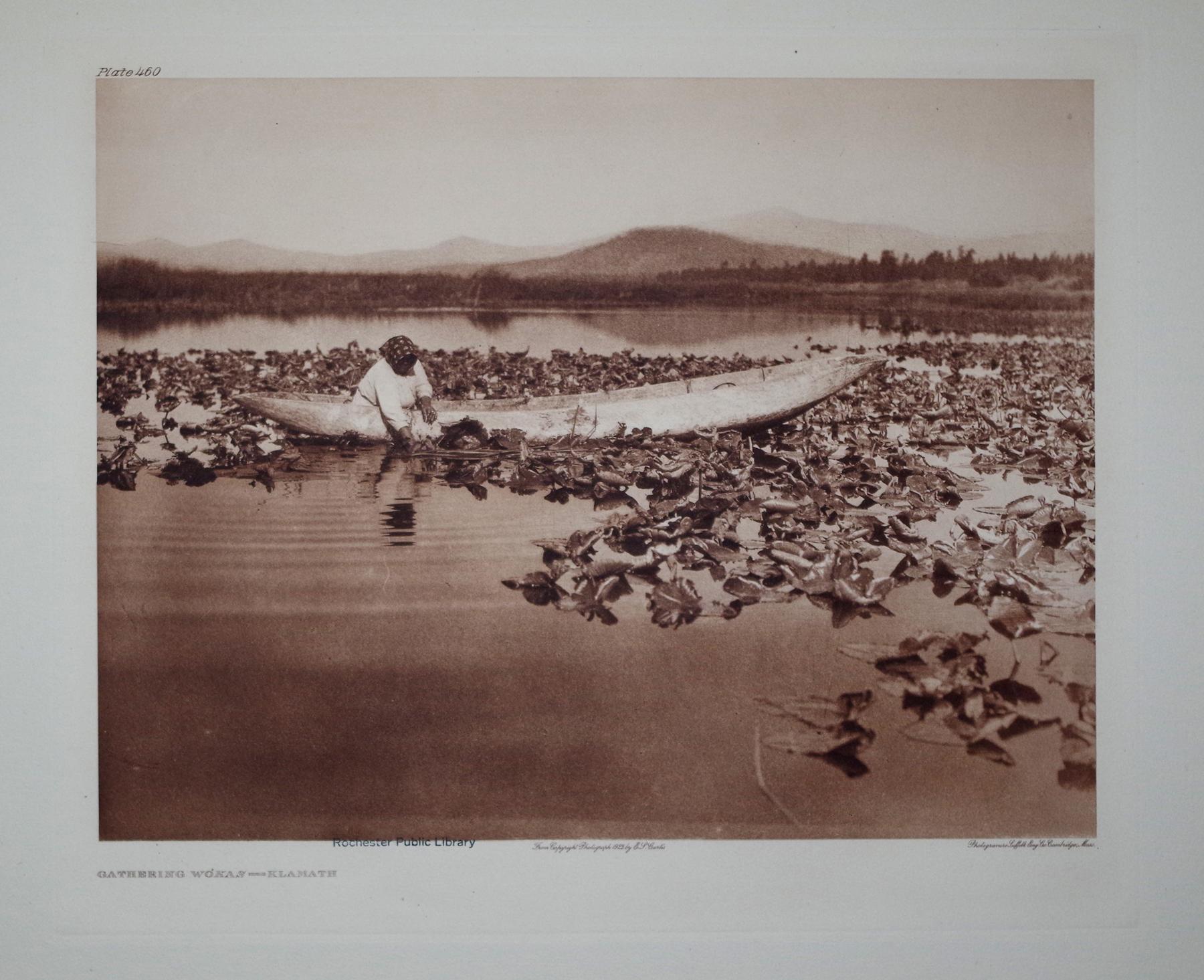 Gathering Wokas - Klamath, Plate 460 from The North American Indian. Portfolio XIII: Edward S. ...