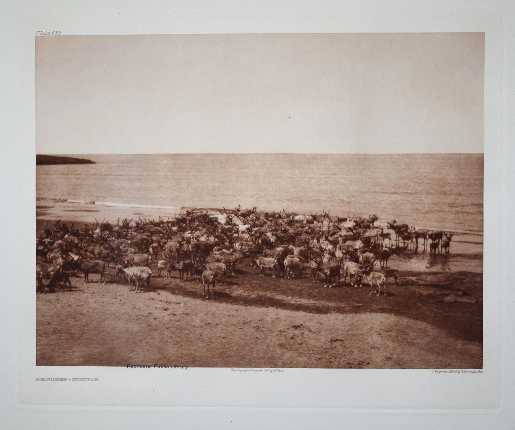 Reindeer - Nunivak, Plate 689 from The North American Indian. Portfolio XX: Edward S. Curtis (1868-...
