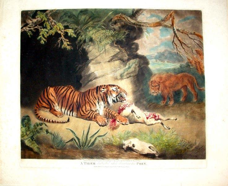 A Tiger Disturbed While Devouring His Prey: James Ward