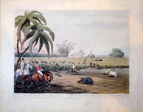Beating Sugar Canes For A Hog./Battue Dans Les Cannes A Sucre, Pour En Faire Sortir Un Sanglier.: ...