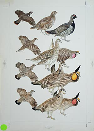 Grouse: Roger Tory Peterson