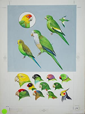 Parrots (Escapes)