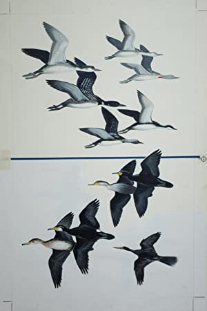 Loons, Cormorants in Flight