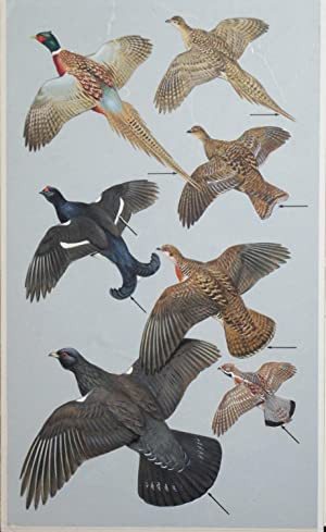 Pheasants, Gamebirds