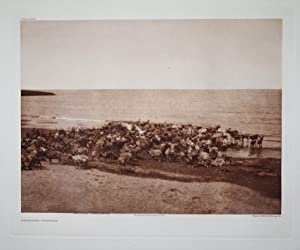 Reindeer - Nunivak, Plate 689 from The North American Indian. Portfolio XX: Edward S. Curtis (1868-...