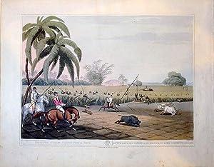 Beating Sugar Canes For A Hog./Battue Dans Les Cannes A Sucre, Pour En Faire Sortir Un ...