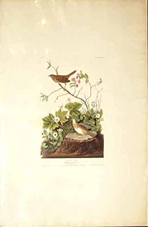 Plate 193 (CXCIII) - Lincoln Finch