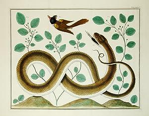 Locupletissimi Rerum Naturalium Thesauri - Tab. LXXXVII: Seba, Albert