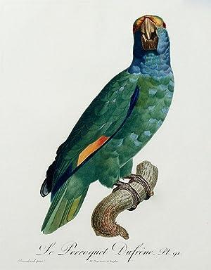 Histoire Naturelle des Perroquets - Plate 91: Barraband, Jacques