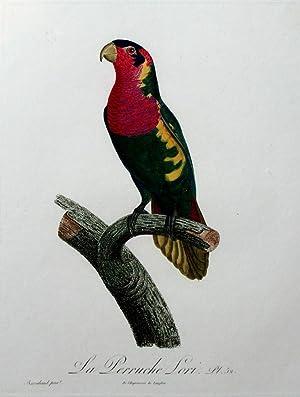 Histoire Naturelle des Perroquets - Plate 52: Barraband, Jacques
