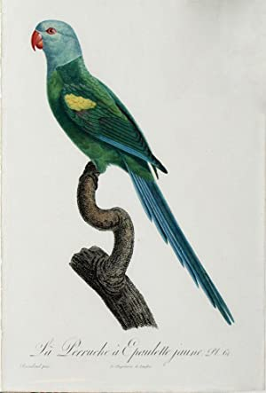 Histoire Naturelle des Perroquets - Plate 61: Barraband, Jacques