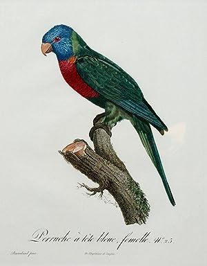 Histoire Naturelle des Perroquets - Plate 25: Barraband, Jacques