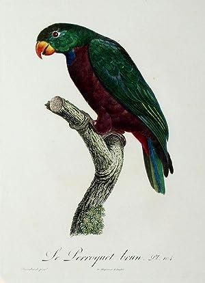 Histoire Naturelle des Perroquets - Plate 104: Barraband, Jacques