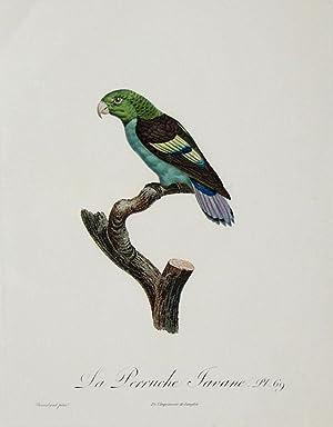 Histoire Naturelle des Perroquets - Plate 69: Barraband, Jacques