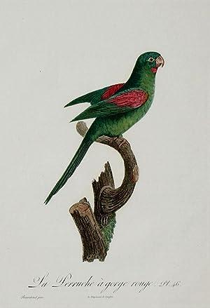 Histoire Naturelle des Perroquets - Plate 46: Barraband, Jacques