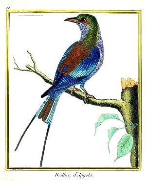Histoire Naturelle des Oiseaux - Plate 88: Francois Nicolas Martinet