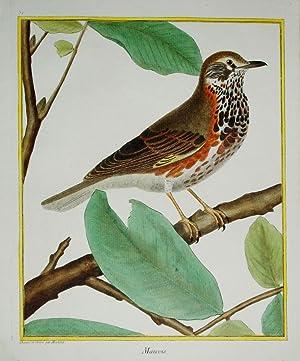 Histoire Naturelle des Oiseaux - Plate 51: Francois Nicolas Martinet