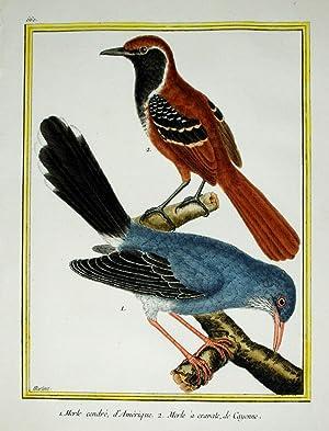 Histoire Naturelle des Oiseaux - Plate 560: Francois Nicolas Martinet