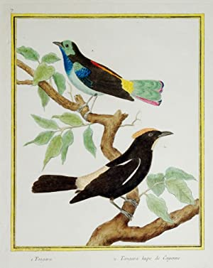 Histoire Naturelle des Oiseaux - Plate 7: Francois Nicolas Martinet