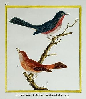 Histoire Naturelle des Oiseaux - Plate 655: Francois Nicolas Martinet