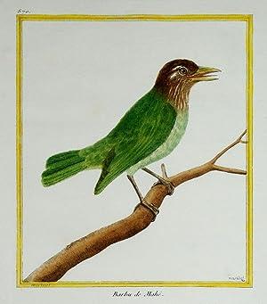 Histoire Naturelle des Oiseaux - Plate 870: Francois Nicolas Martinet