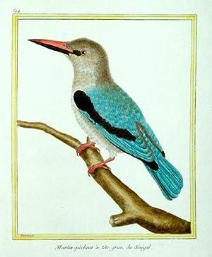 Histoire Naturelle des Oiseaux - Plate 594: Francois Nicolas Martinet