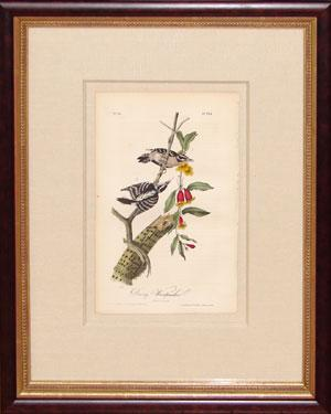 Plate 263 - Downy Woodpecker