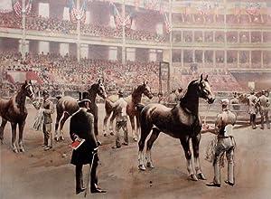 Judging Hackney Stallions: W.S. Vanderbilt Allen