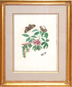 The Painted Lady: Maria Sibylla Merian