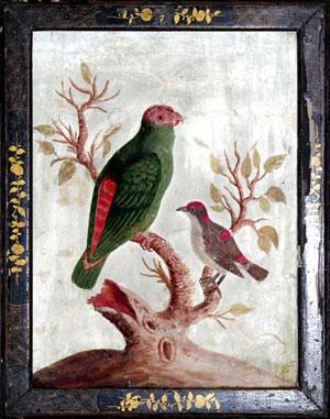The Smallest Green Red Indian Parakeet and the Little Black, White and Red Indian Creeper: Samuel ...