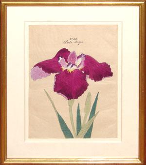 Japanese Watercolor of Iris - No. 50