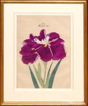 Japanese Watercolor of Iris - No. 6