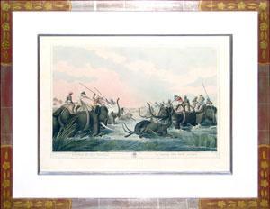 Hunting an Old Buffalo: Edward Orme