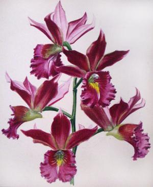 Purple Orchids: Goossens