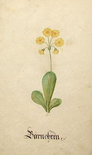 Botanical watercolor from Calendarium: Sebastian Schedel