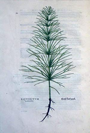 Equisteum, Plate 322: Leonhart Fuchs