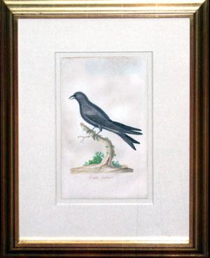 Purple Swallow: John Abbot (1757- ca.1840)