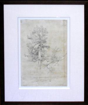 Study of California Sequoia Tree: Frederick Catherwood (1799-1854)