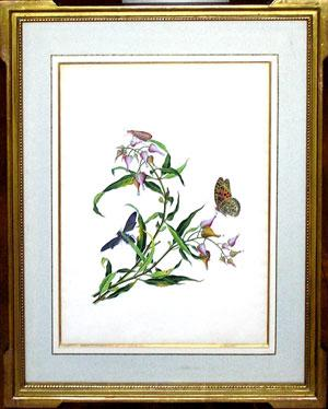 Chinese watercolor of botanicals and butterflies: Cantonese School