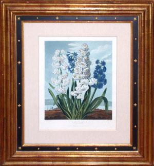 Hyacinths: Dr. Robert John Thornton (c.1765-1832)