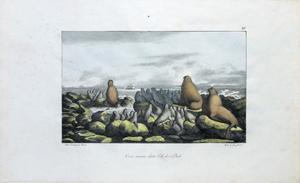 Ours marins dans lile des Paul, Pl. XV: Louis Choris