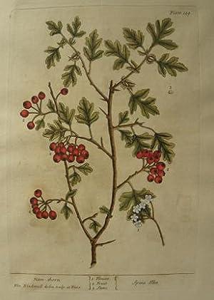 pl. 149 Han-Thorn: Elizabeth Blackwell