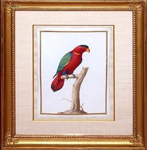 Fictitious Parrot: Nicolas Robert