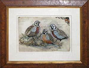 Artist proof for A Monograph of the Odontophorinae, or Partridges of America.: John and Elizabeth ...