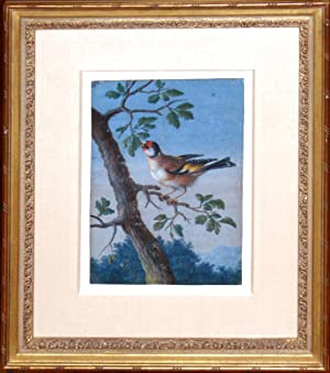 Watercolor of a bird on a branch: One of eleven exceptionally rare fine gouache on vellum ...