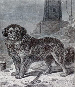 Herr Friedrich s Bergund  Moulon  from The Illustrated Book of the Dog